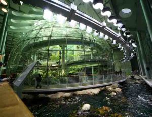 California Academy of Sciences Indoor Rainforest