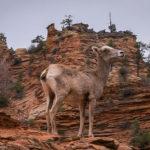 시온 국립공원(Zion National Park)