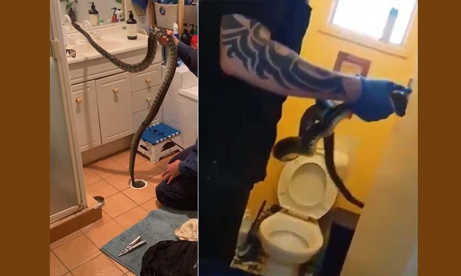 거대한 뱀을 한 가정집의 배수구와 변기에서 제거하는 영상