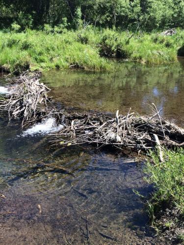 Broken beaver dam on Blackwood Creek June 2014